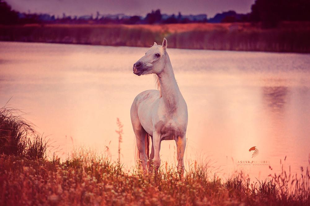 озеро конь в картинках степях
