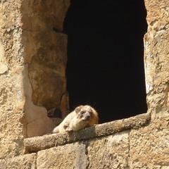 Хранитель средневекового замка
