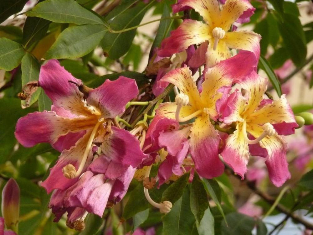 израиль картинки цветов через новый