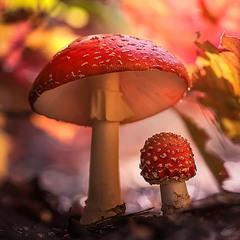 Спрятались в осени