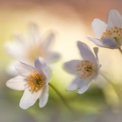 Нежность. Она как весна.