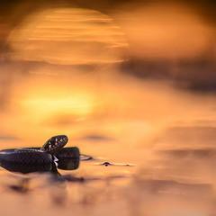 Закат. Как змеи, волны гнутся