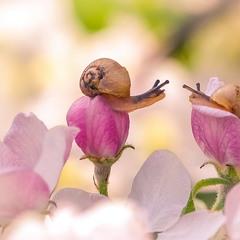 Весна.Любовь