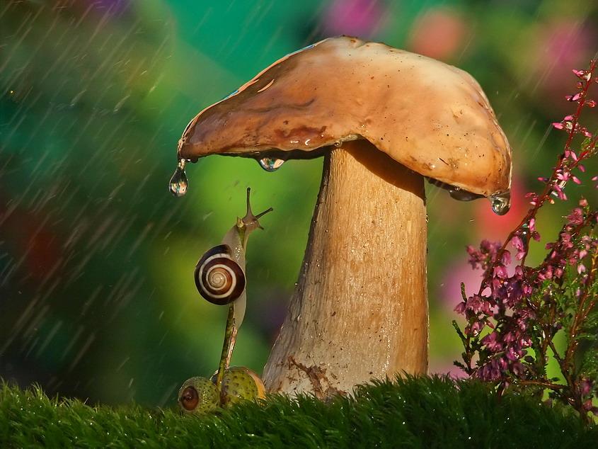 владелец гриб под дождем картинки мужские