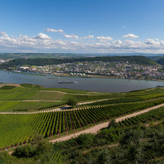 Где рождаются Рейнские вина