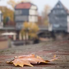 Осень продолжается...