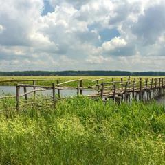 Летний пейзаж с мостиком