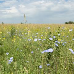 Радость лета с полевыми цветами