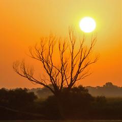 Апельсиновое утро