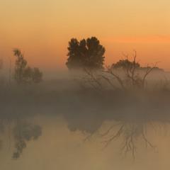 Мистика утреннего тумана