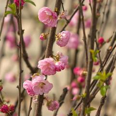 Весна чарує