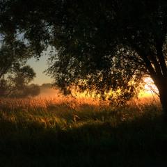 В час ранний дивными лугами