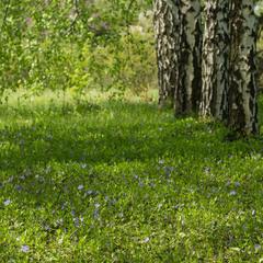 Весна прийшла! Гаї зазеленіли.