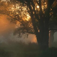 С рассветом по осени