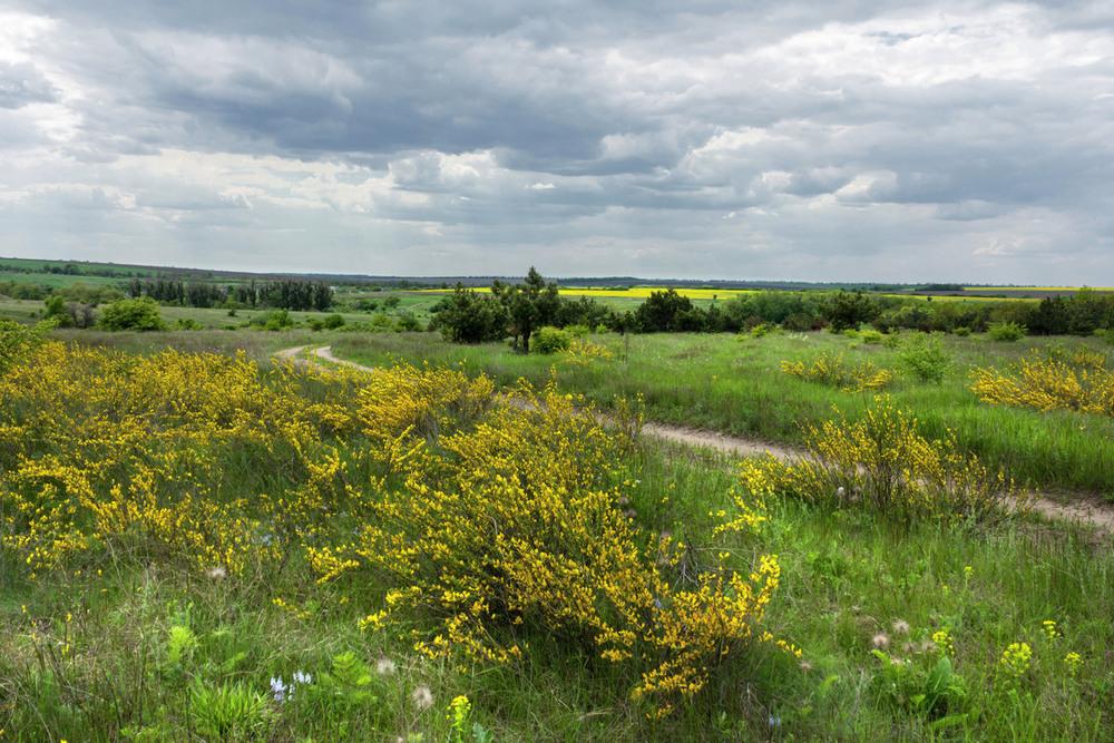 украинская лесостепь картинки появилась свет популярном