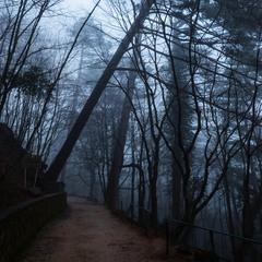 про лес и и туман