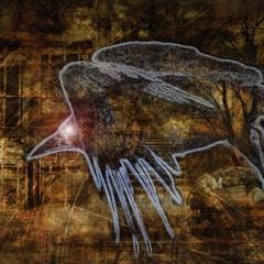 Тень ворона