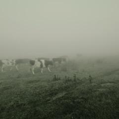 Йшли корови із діброви