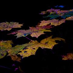 Отруйне різнобарв'я осені