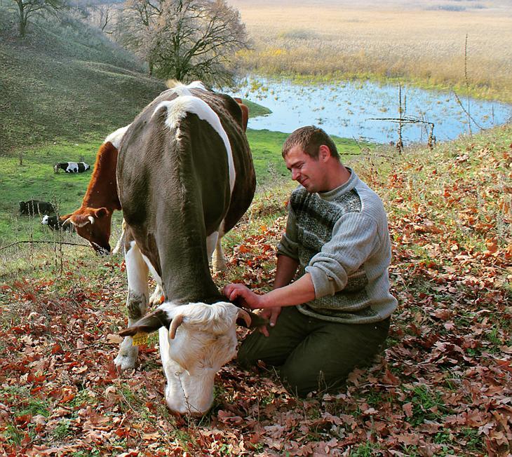 хозяин с коровой картинка речь заходит том