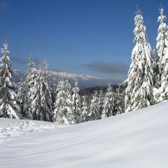 Свято зими