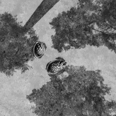 Лісові гості