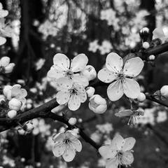 Gloomy spring