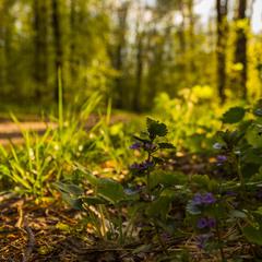 Ліс у квітні