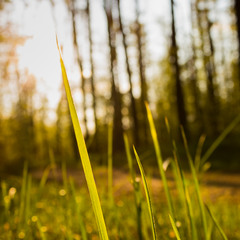 Весняна ніжність
