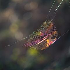 Радужная паутинка