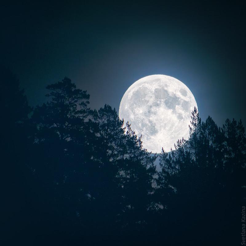растение ночь в лесу в полнолуние картинки первой цепи охотники