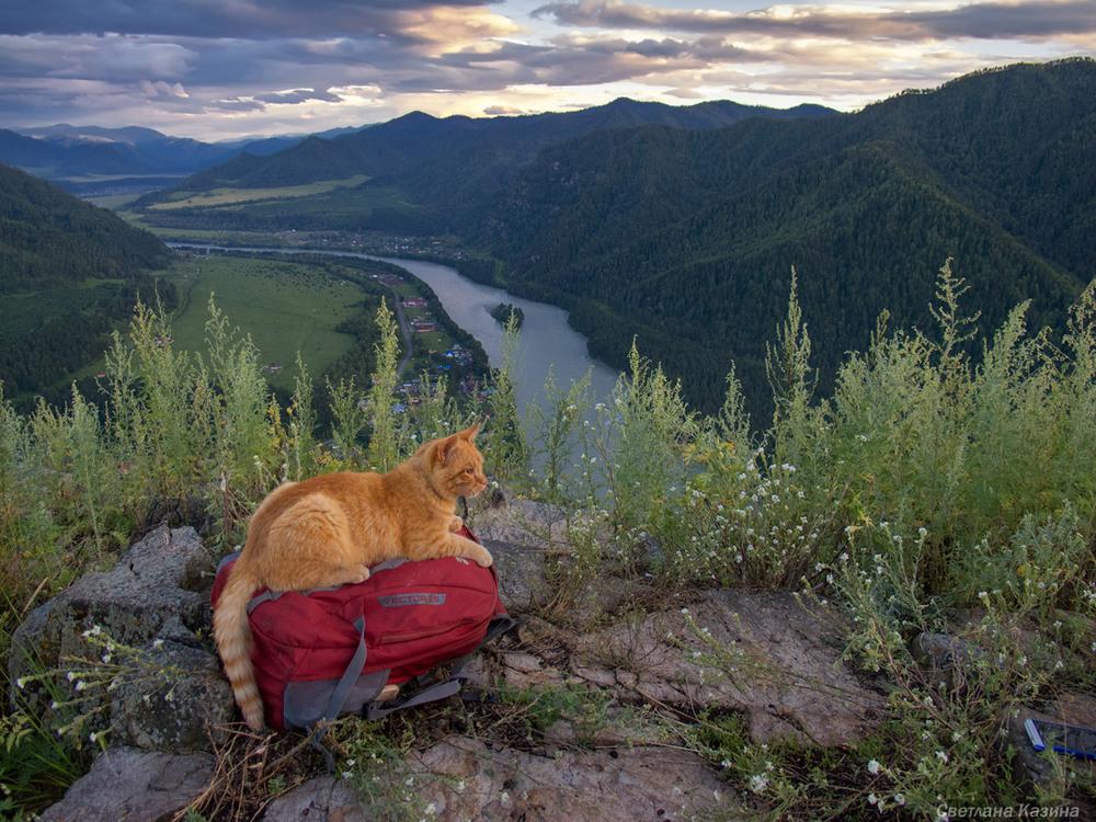 картинки с котами в горах конструкция