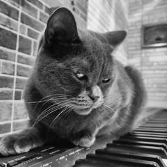 La Pianiste...