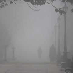 бредущие в тумане