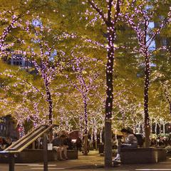 ноябрьский вечер в Нью-Йорке