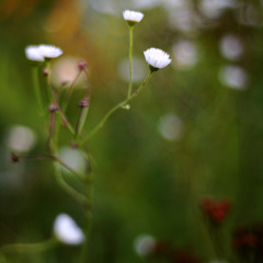 Цветочный смузи