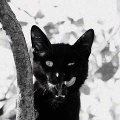 Кот,просто кот^.^