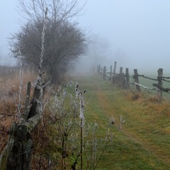 Foggy Way to the Wizard of Oz