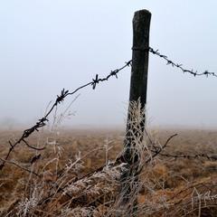 Колючий дріт в тумані