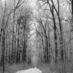 холодный лес