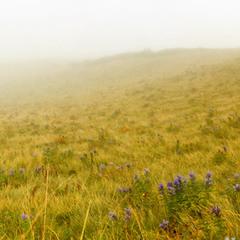 туманная поляна