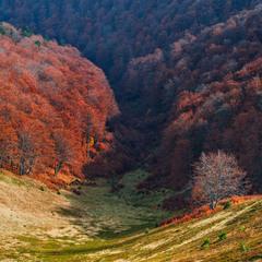 Осінні барви Карпат