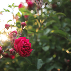 Сонце в наших долонях, а його промені в наших очах...