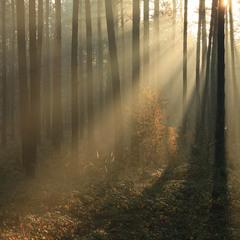 Осенняя вспышка