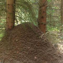 Санитары леса