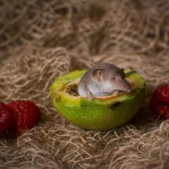 Мышка-норушка)