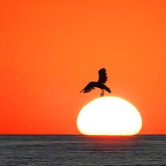 Птица, уносящая солнце на завтрашний день
