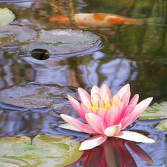 На озере в райском саду...