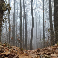 """Ощущая себе """"маленьким"""" в огромном многовековом лесу (2)"""