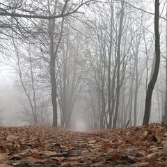 """Ощущая себе """"маленьким"""" в огромном многовековом лесу"""